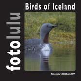 Birds of Iceland - fotolulu's Bildband 4