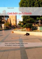 Gott liebt auch Hunde - Fotos von freien Hunden...