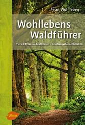Wohllebens Waldführer - Tiere und Pflanzen best...