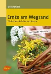 Ernte am Wegrand - Wildkräuter, Früchte und Beeren