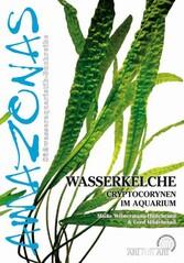 Wasserkelche - Cryptocorynen im Aquarium