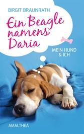Ein Beagle namens Daria - Mein Hund & ich
