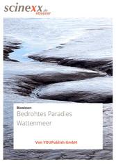 Bedrohtes Paradies Wattenmeer - Wo der Meeresbo...